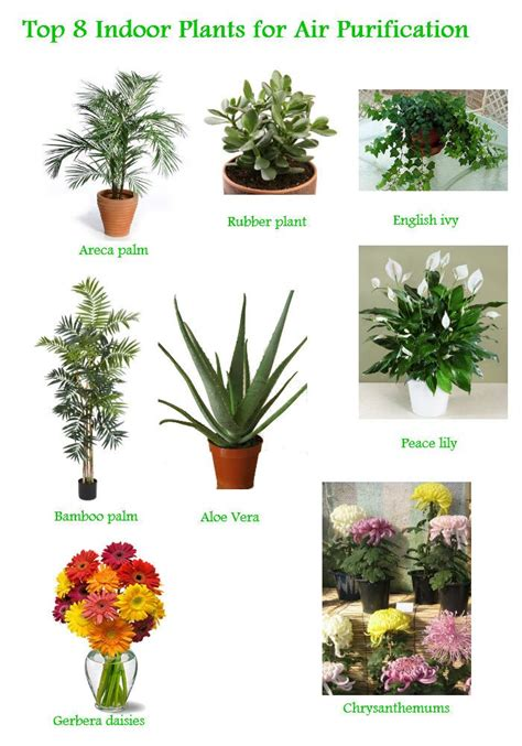 best houseplants for clean air 78 best images about indoor plant on pinterest plants
