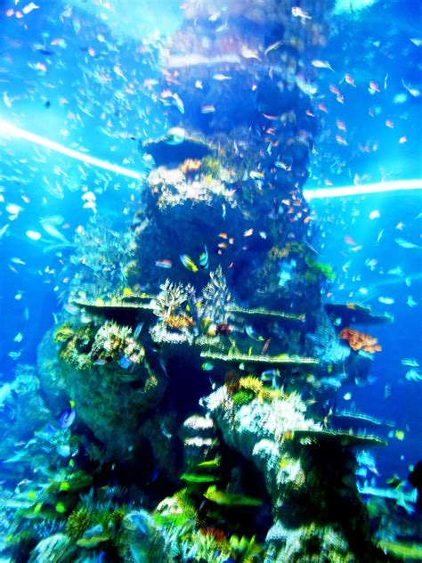 Marine 35gr Makanan Ikan Laut Free wallpaper ikan bergerak dalam aquarium images hewan lucu