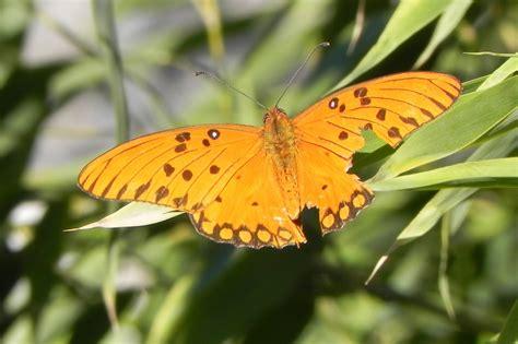 libro el ala rota mariposa con el ala rota dippy fotos