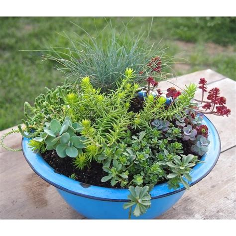 piante grasse fiorite da esterno piante grasse da esterno adatte in vaso 2 vivaio