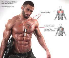 Bench Or Dumbbell Press Exercises To Sculpt The Chest