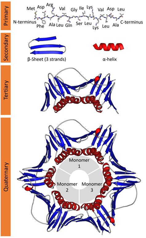 protein structure wikipedia