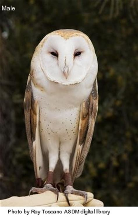 Armchair General Definition the best 28 images of what eats barn owls feeding