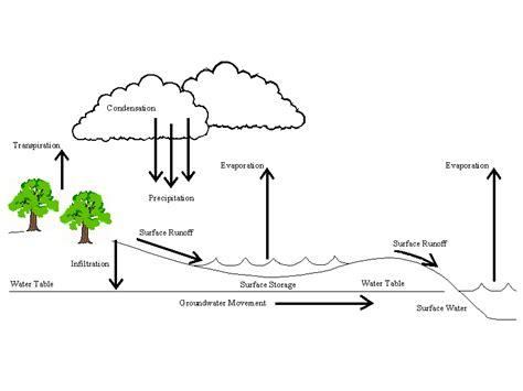 Hydrologic Cycle Worksheet by Watersheds
