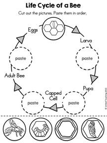 1000 ideas about bee activities on pinterest life cycles