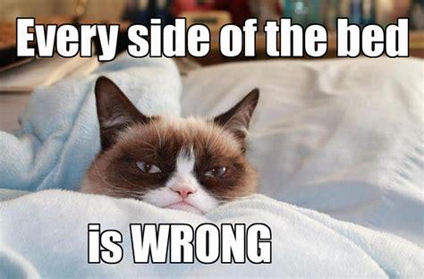 Funny Grumpy Cat Meme - grumpy cat3 some pets