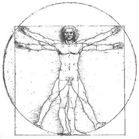 michelangelo s david a humanist symbol thehumanist com how is anthropometry used in architecture