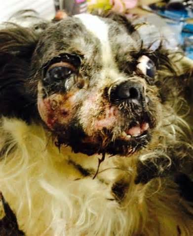 puppy mill puppies millie s mission gives puppy mill a second chance