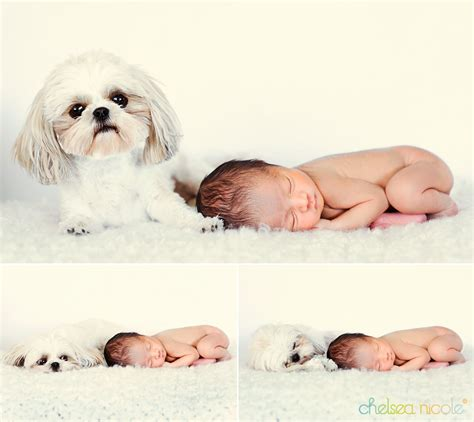 newborn baby puppies newborn baby