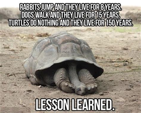 Funny Turtle Memes - funny animals are even funnier with these captions 30 pics