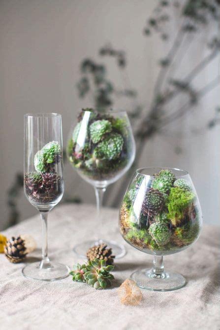piante grasse in vaso di vetro 20 best piante in vaso images on succulents