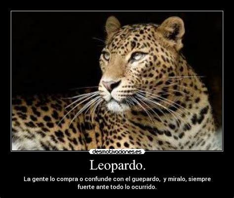 imagenes de jaguar y leopardo leopardo desmotivaciones