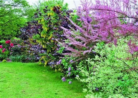 Plante Pousse Rapide by Plante Brise Vue Pousse Rapide Fabulous Plantes Qui