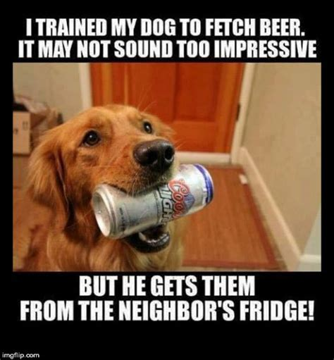 funny dog memes thatll capture  heart