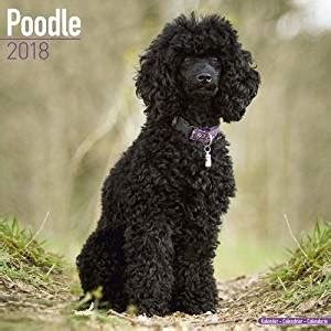 leopard calendar 2018 16 month calendar books poodle calendar breed calendars 2017 2018 wall