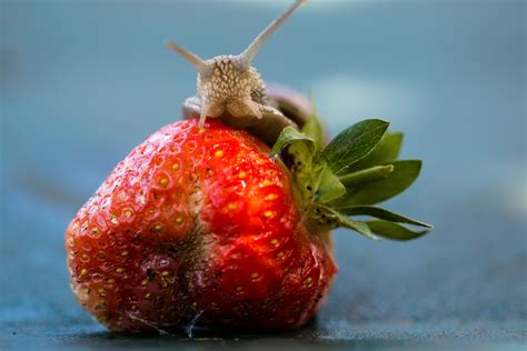 what is flower food images nature plant fruit flower food red produce