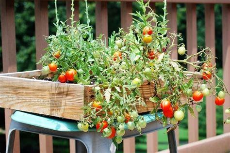 giardino sul balcone orto sul balcone orto in balcone come coltivare l orto