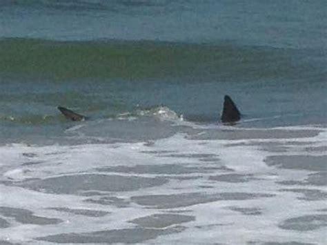 2015 beach shark attack shark at beach hot girls wallpaper