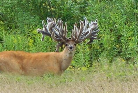 buck of what do you think of these 10 weirdly farm raised