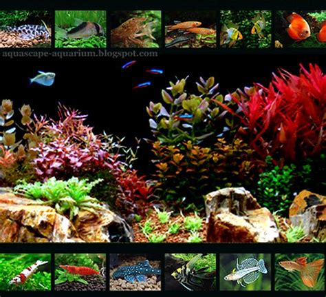 aquascape plants list aquarium may 2011