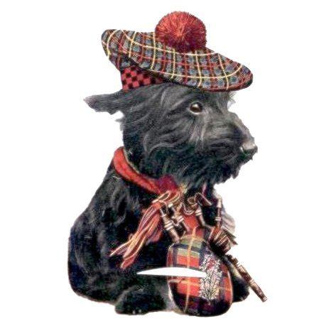 scottish dogs scottish names dogtime