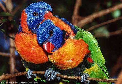 imagenes animales y naturaleza naturaleza los animales son agradables hermosos y