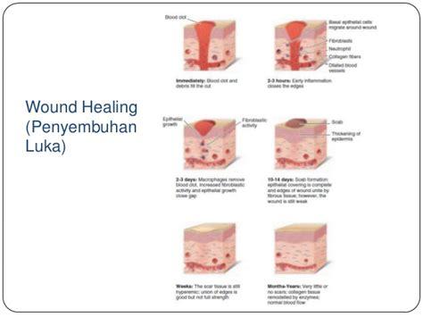 Obat Nitrogliserin struktur dan fungsi kulit