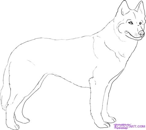 how to a husky how to draw a husky step by step pets animals free drawing tutorial added