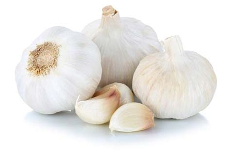 garlic and dogs why is garlic bad for dogs and can dogs eat garlic in small amounts