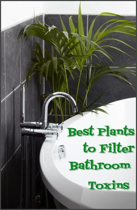 plants to keep in bathroom 25 best ideas about plants in bathroom on pinterest