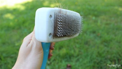 slicker brush for dogs review the pet portal slicker brush for dogs top tips