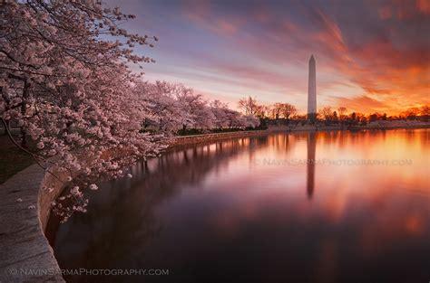 cherry blossom festival dc 2012 100th anniversary cherry blossom festival dc and