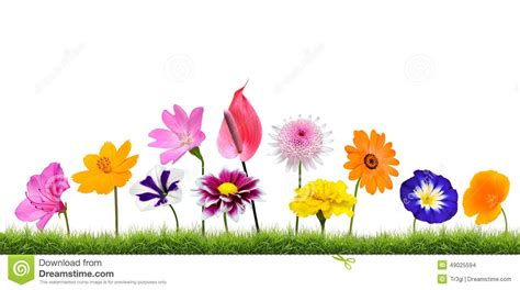 flower growing clipart www pixshark com images