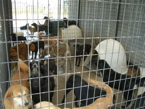 kill shelters animals abandoned rejected and hoarded by no kill shelters all pet news