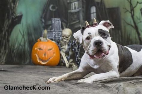 halloween diy ghost costume   dog