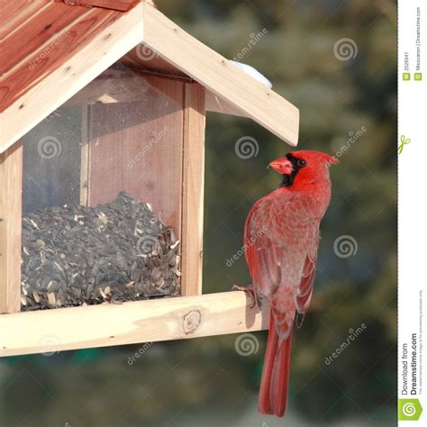 red cardinal at bird feeder stock image image 2526941