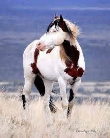 beautiful tri color paint i horses
