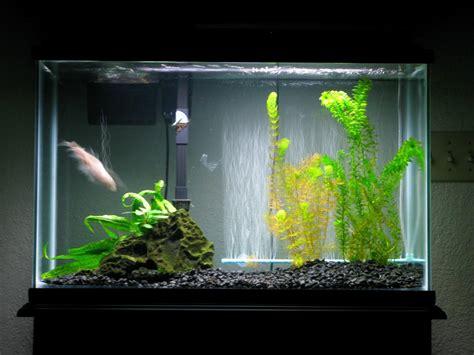 Betta Tank Decor Ideas by Best Aquarium For Betta Fish Aquarium Design Ideas