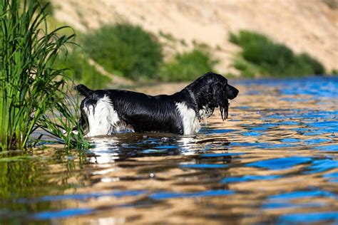can all dogs swim can your swim why some breeds can t swim pets4homes
