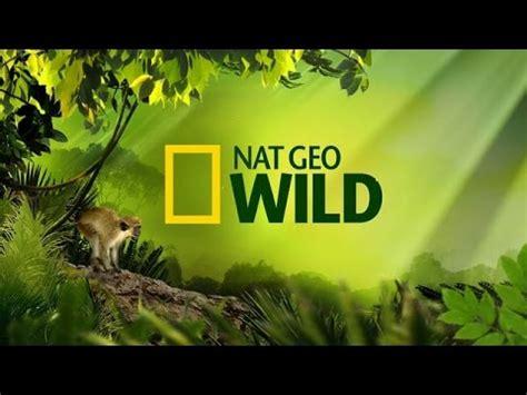 Natgeo World 5 clip hay japan nature nat geo jb5hpe2vp1g