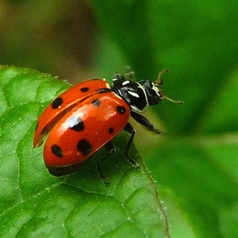 picture of insects top 10 most beautiful insects