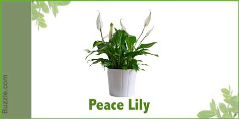 indoor plants no sunlight dress up your home with these indoor plants that don t