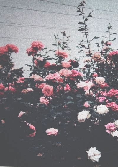wallpaper tumblr vintage for iphone background heart hipster iphone nature pastel