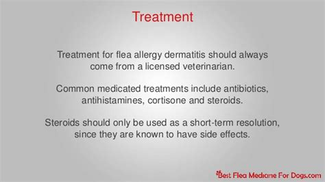 flea allergy home remedy flea allergy dermatitis in dogs