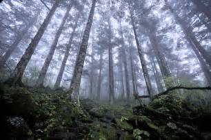 le forest file shennongjia forest jpg wikimedia commons