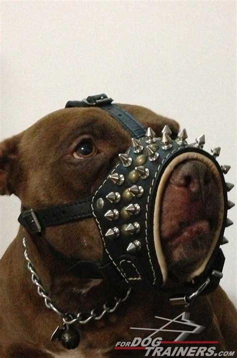 muzzle for pitbull choose spiked nappa padded muzzle stop pitbull barking