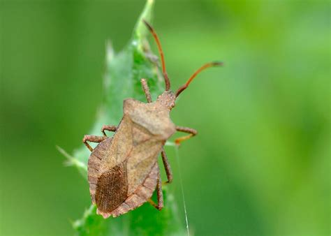 most common garden pests common garden pests 101 homegrown
