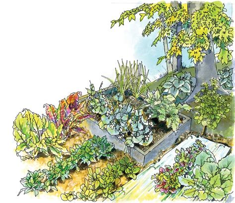 What Garden Vegetables Like Shade Craftionary