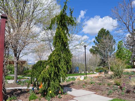 Conservation Garden Park by Weeping Spruce