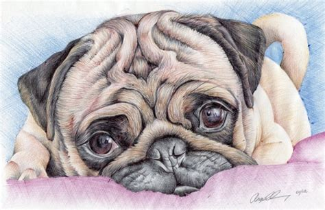 how much is a pug puppy in australia 233 best images about animal drawings paintings on on canvas